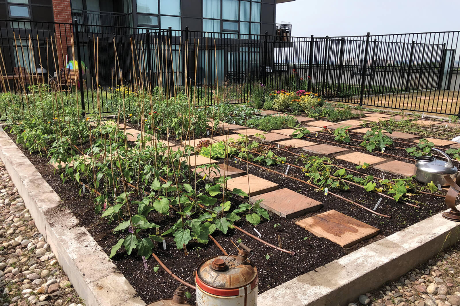 a raised rooftop urban garden