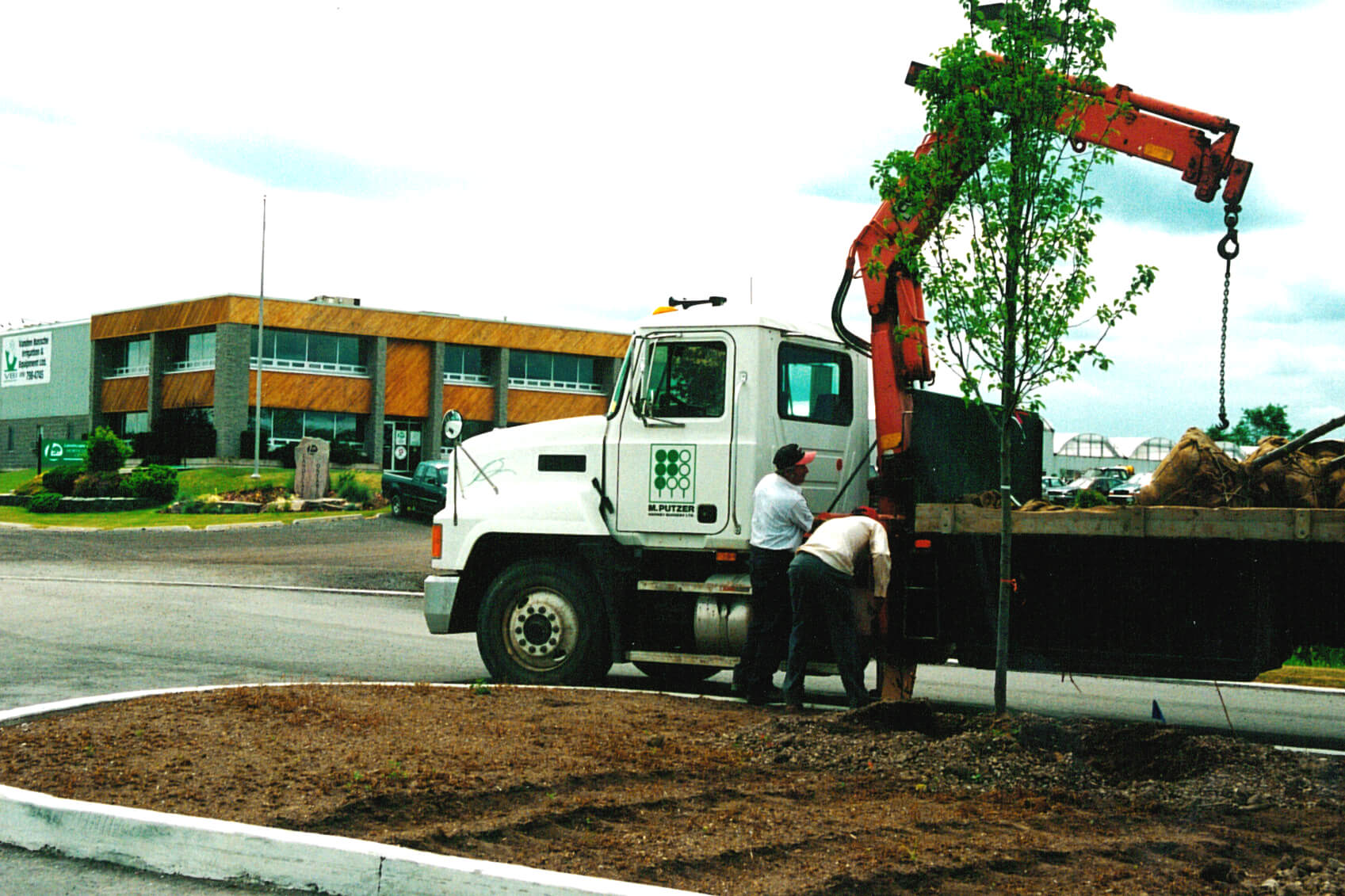 crane truck and crew planting a large tree