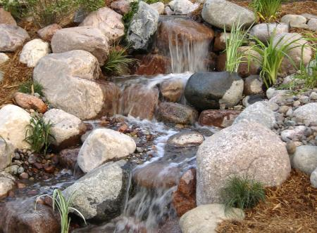 Water Garden Design Landscape Green For Life