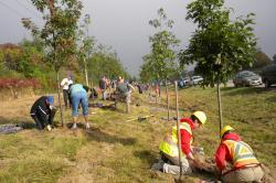 planting trees along the highway
