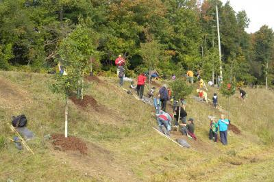 volunteers planting trees on a slope beside the highway