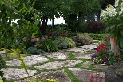 natural stone path surrounded by plants