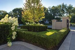 trimmed boxwood hedge