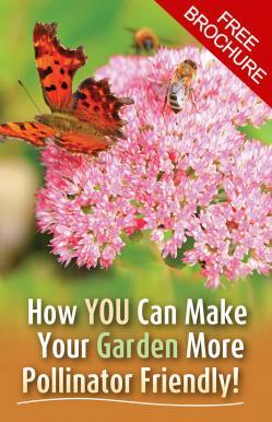 How you can make your garden more pollinator friendly