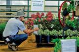Various lots of plant material go up for bid at the annual industry auction.