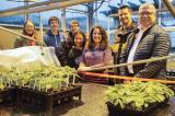 Niagara College students are helping to determine optimal propagation method for oak seedlings.