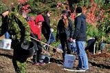 People of all ages, including Canadian soldiers and Silver Cross Parents, have joined forces to plant 117,000 trees to honour our war heroes.