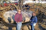Paul Offierski and Leslie Goettsch of PAO Horticultural stand in front of the century-old magnolia that has been wrapped by the PAO crew, Sergo Anniano, Clint Cripps and John McNeil.