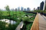 Designed ecologies by Dr. Yu are wild and beautiful. Skywalks allow pedestrians to access the landscape.