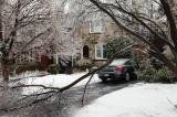 The December 2013 ice storm may draw attention to the benefits of the proper care and pruning of urban trees.