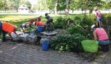 Upper Canada Chapter members donated their expertise and material to beautify the gardens at Hospice Kingston.