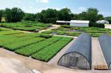 Verbinnen's Nursery grows about 120 varieties of native trees and shrubs on 26 acres near Dundas.