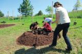 Students planting a four-year grafted butternut at Humber Arboretum