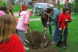 Students at Wolfe Island School made their city of Kingston cool by planting a tree.
