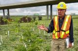 Nursery grower Peter Braun at one of the test sites along Highway 401.
