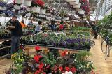 Where quality, service and selection are emphasized, retail garden centres continue to do well.