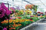 Van Dongen's Garden Centre, Landscaping and Nurseries, Milton, Ont., is one of the stops for the IGCA visitors.