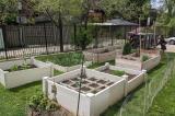 St. George Community Garden, Toronto, Ont.