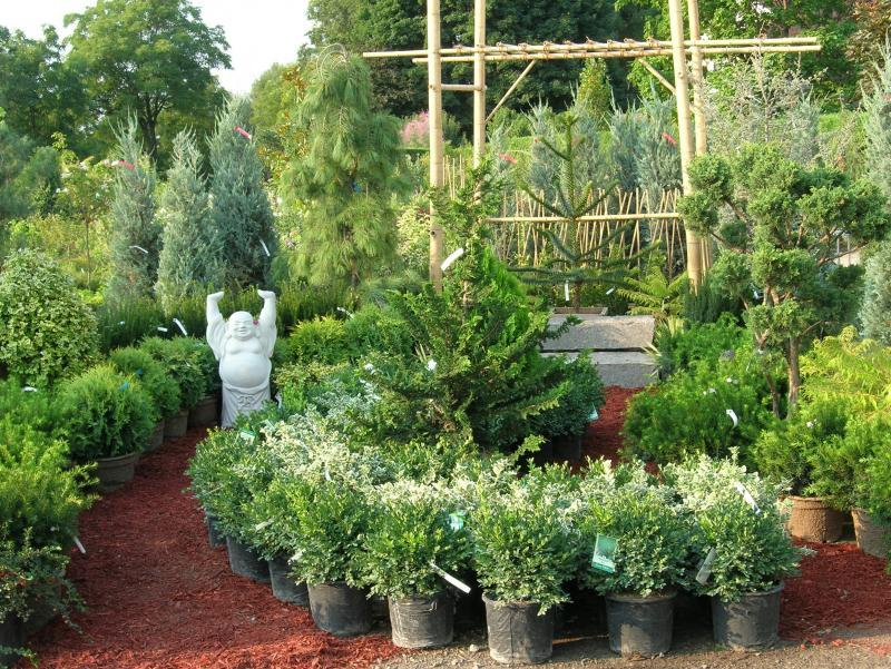 2007 - Outstanding Display of Plant Material - Evergreens and/or Broadleaf Evergreens