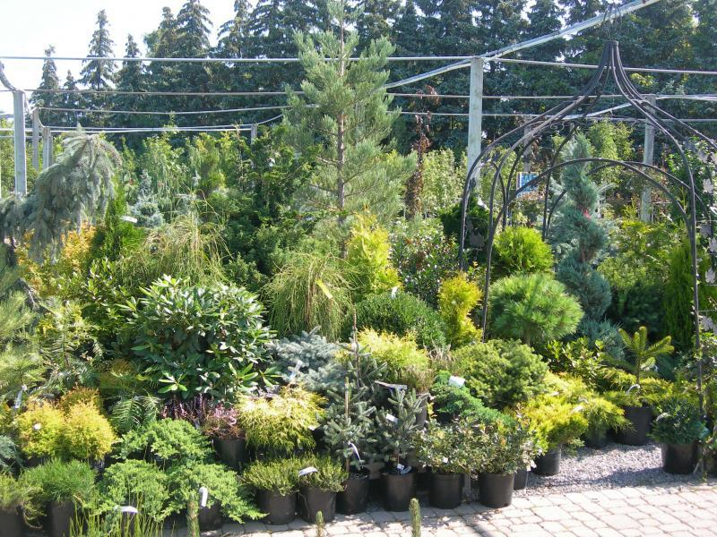 2009 - Outstanding Display of Plant Material - Evergreens and/or Broadleaf Evergreens