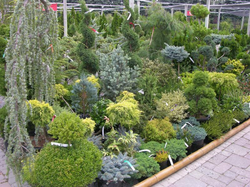 2010 - Outstanding Display of Plant Material - Evergreens and/or Broadleaf Evergreens