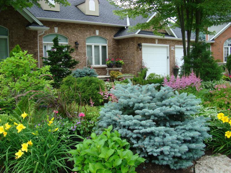 2010 - Private Residential Maintenance - Under 15,000 sq ft lot size - close  up    of   front  garden   and blue  spruce