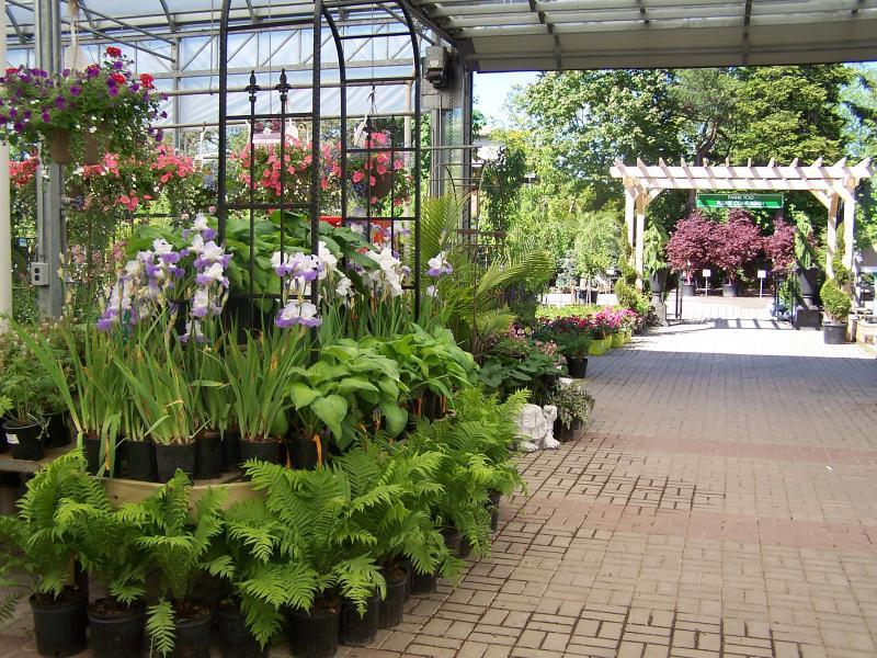 2011 - Outstanding Display of Plant Material - Annuals and/or Perennials - Annuals & Perennials 6