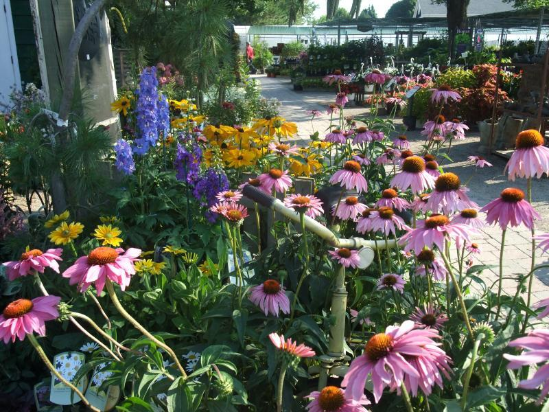 2011 - Outstanding Display of Plant Material - Annuals and/or Perennials - Beautiful selection of sun-loving perennials