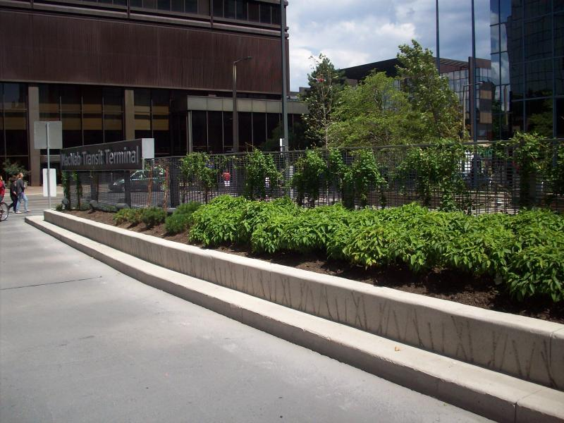 2011 - Commercial Construction - multi-residential & industrial -$50,000 - $100,000 - Raised concrete planting island with upright steel grating for vines