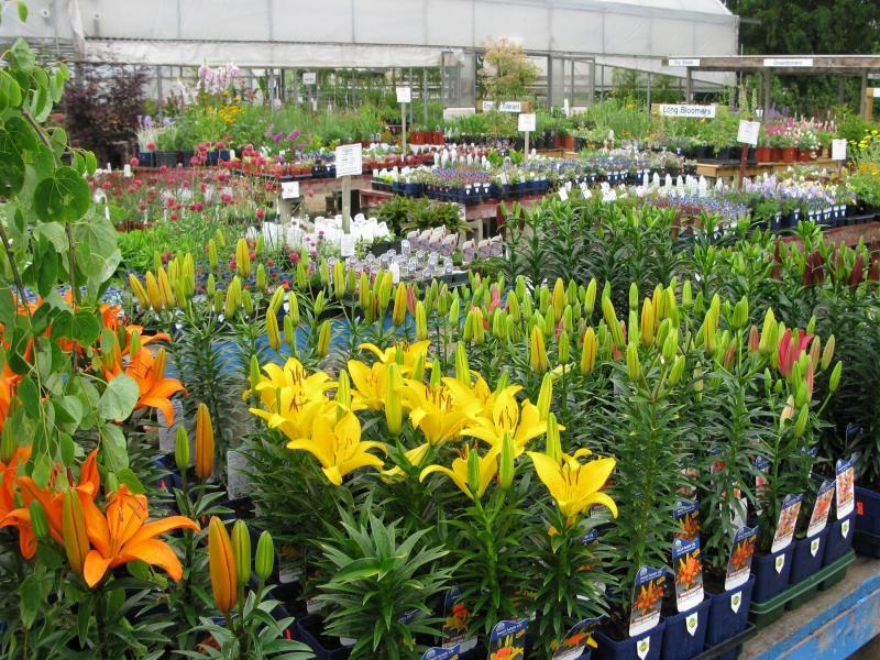 2012 - Outstanding Display of Plant Material - Annuals and/or Perennials