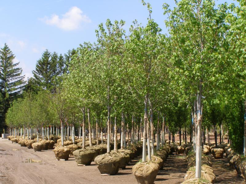 2012 - Outstanding Display of Plant Material - Deciduous Shrubs and/or Trees