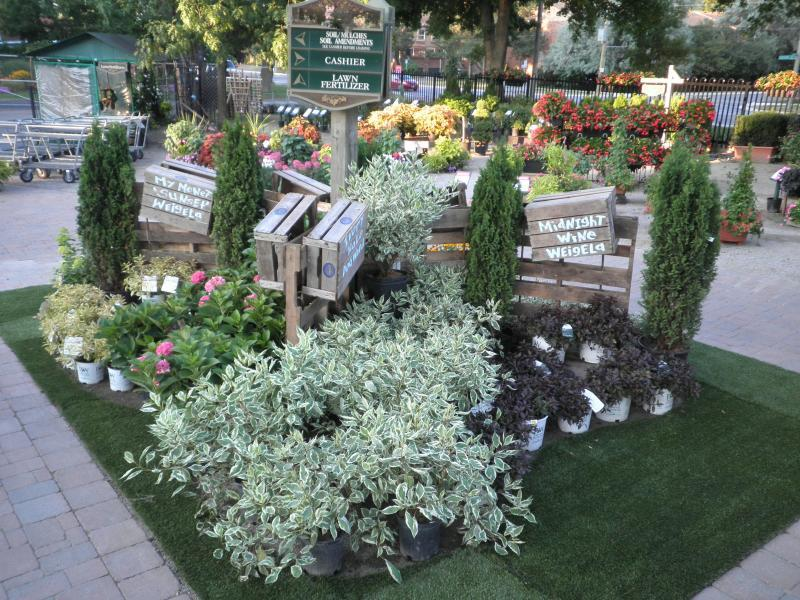 2012 - Outstanding Display of Plant Material - Deciduous Shrubs and/or Trees - Summer shrub display