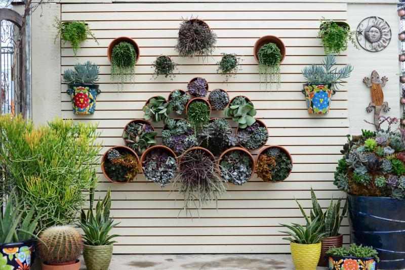 2017 - Outstanding Display of Plant Material - Your Specialty