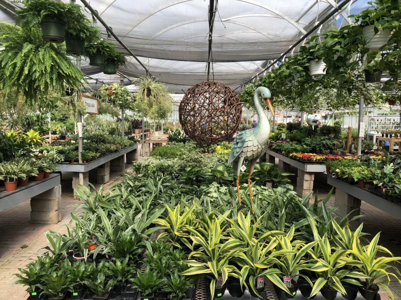 2018 - Outstanding Display of Plant Material - Your Specialty